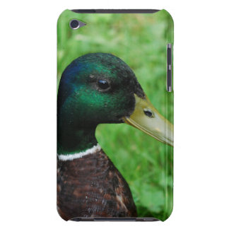 Mallard iTouch Case Barely There iPod Covers