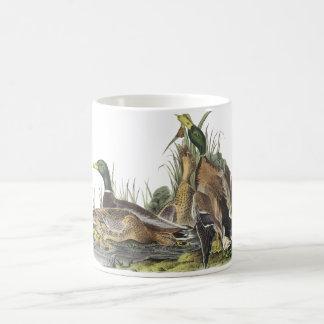 Mallard, John Audubon Coffee Mug