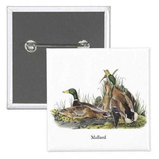 Mallard, John Audubon Pins