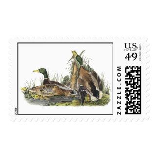 Mallard, John Audubon Stamp