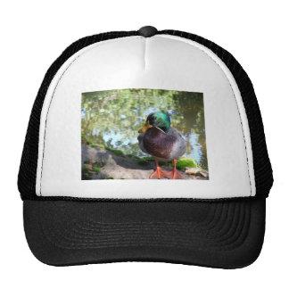 Mallard Mesh Hats