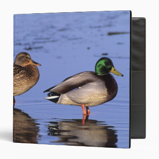 Mallard pair Canada, north america Binder
