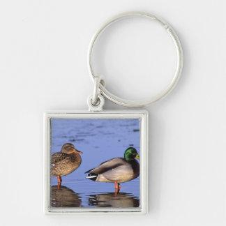 Mallard pair Canada, north america Silver-Colored Square Keychain