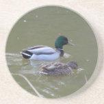 Mallard Pair Swimming in Lake Drink Coaster