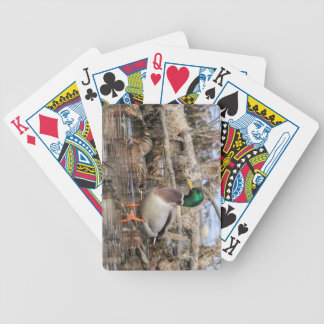 Mallard Deck Of Cards