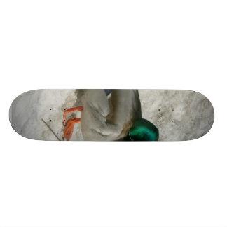Mallard Sitting In Snow Anas Platyrhynch Skateboard