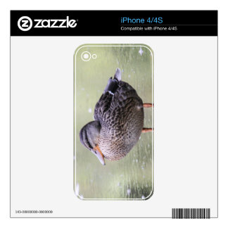 Mallard Skins For iPhone 4