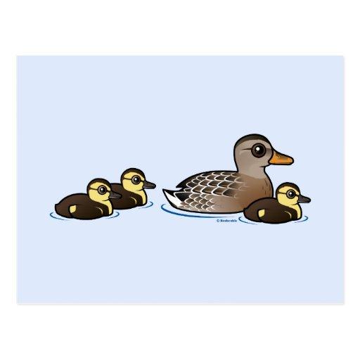 Mallard & three ducklings postcards