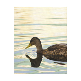 mallard with colorful reflections canvas print