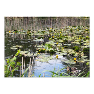 Mallards and Lilies Personalized Announcement