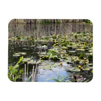 Mallards and Lilies Magnet