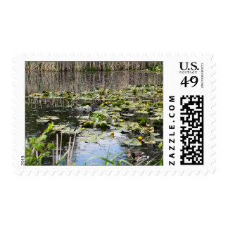 Mallards and Lilies Postage