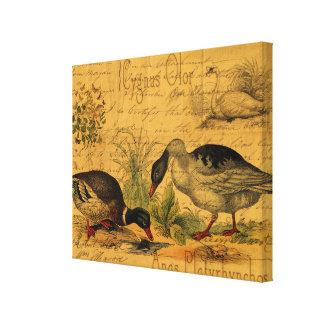 Mallards and Swan Collage Canvas Print