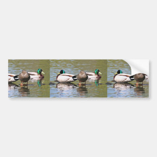 Mallards Bumper Stickers