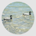 Mallards by the shore round stickers