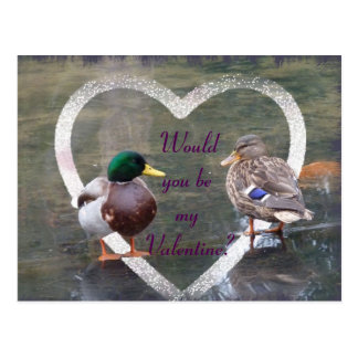 Mallards courtship postcard