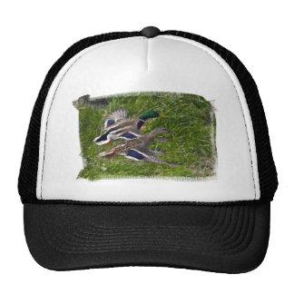 Mallards Flying Trucker Hat