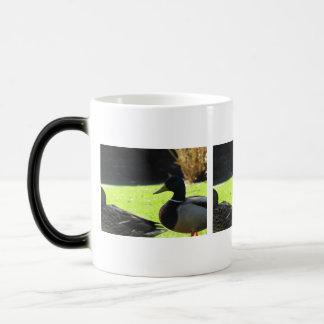 Mallards in the Grass Magic Mug