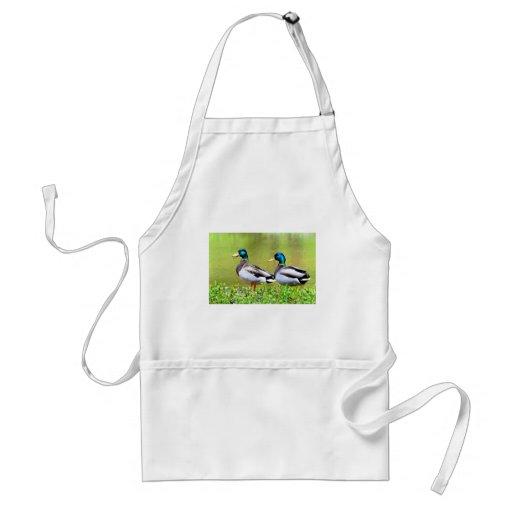 Mallards on the bank of pond apron