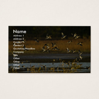 Mallards rising from water business card