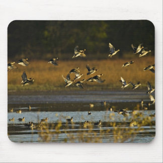 Mallards rising from water mouse pad