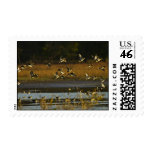 Mallards rising from water stamp