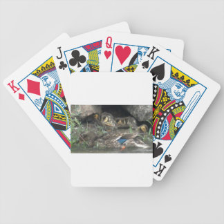 Mallards Safe from the Elements Card Deck