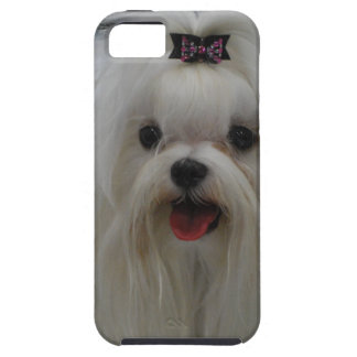 maltese-23.jpg iPhone SE/5/5s case