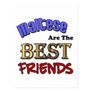 Maltese Are The Best Friends Postcard