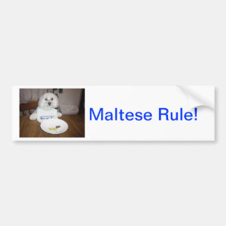 Maltese At Dinner Bumper Sticker