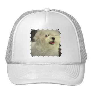 Maltese Baseball Hat
