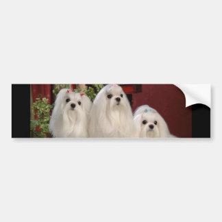 Maltese Bumper Sticker