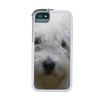 Maltese Dog iPhone 5 Covers