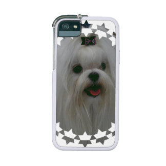 Maltese Dog iPhone 5/5S Cover