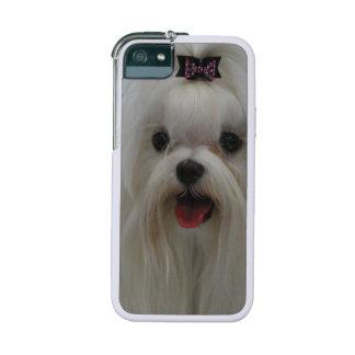 Maltese Dog iPhone 5/5S Case