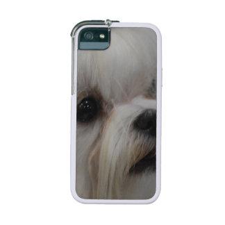 Maltese Dog iPhone 5 Case
