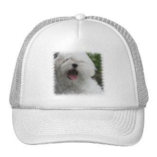 Maltese Dog Hat