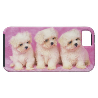 Maltese Dog; is a small breed of white dog iPhone SE/5/5s Case