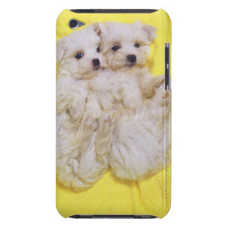 Maltese Dog; is a small breed of white dog that 2 Barely There iPod Cover