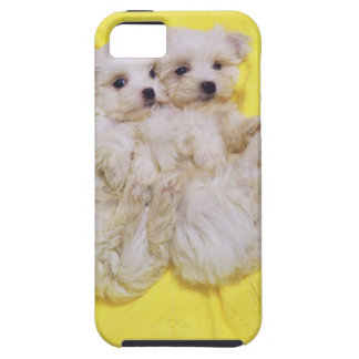 Maltese Dog; is a small breed of white dog that 2 iPhone SE/5/5s Case
