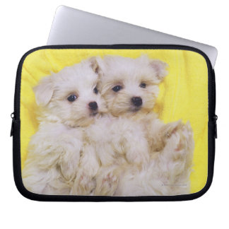 Maltese Dog; is a small breed of white dog that 2 Laptop Computer Sleeves