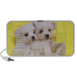 Maltese Dog; is a small breed of white dog that 2 Mini Speaker