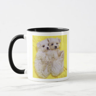 Maltese Dog; is a small breed of white dog that 2 Mug