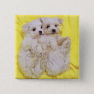 Maltese Dog; is a small breed of white dog that 2 Pinback Button