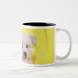 Maltese Dog; is a small breed of white dog that 2 Two-Tone Coffee Mug