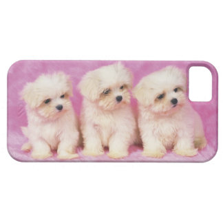Maltese Dog; is a small breed of white dog that iPhone SE/5/5s Case