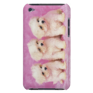Maltese Dog; is a small breed of white dog that iPod Touch Case