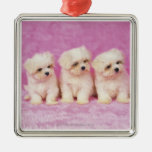 Maltese Dog; is a small breed of white dog that Metal Ornament