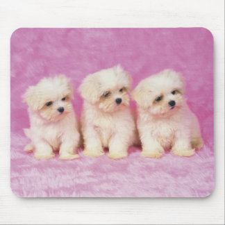 Maltese Dog; is a small breed of white dog that Mouse Pad