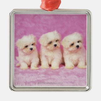 Maltese Dog is a small breed of white dog that Christmas Ornaments
